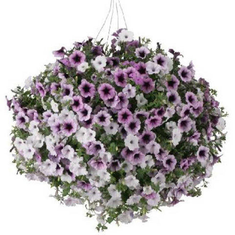 Petunia Hanging Basket (Choose Size)
