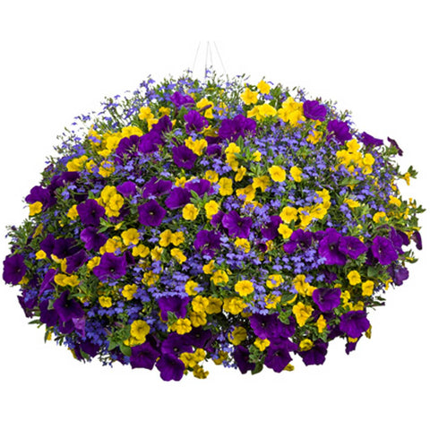 Premium Mixed Annual Hanging Basket