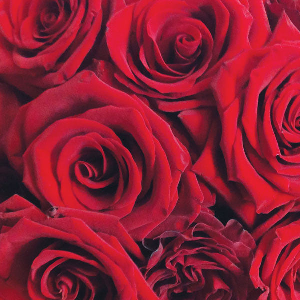 Dozen Longstem Red Roses