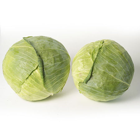 Organic Cabbage Green