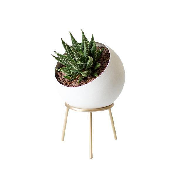 Kitbox Globe Mini Planter - Thirty Six Knots - thirtysixknots.com