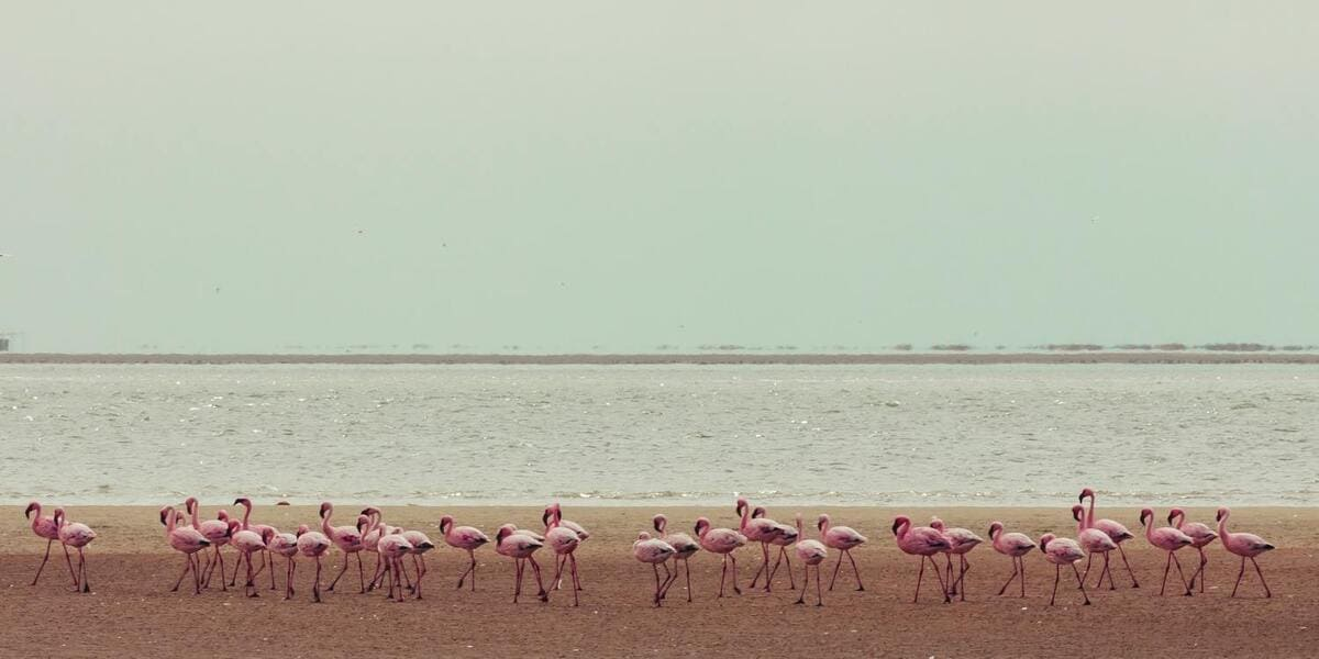 flamants roses plage Galapagos