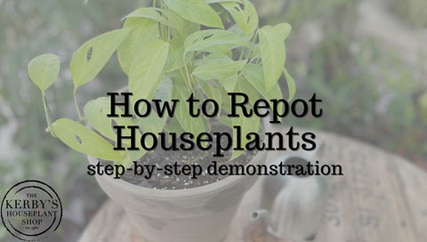 Video Link - How to Repot Houseplants