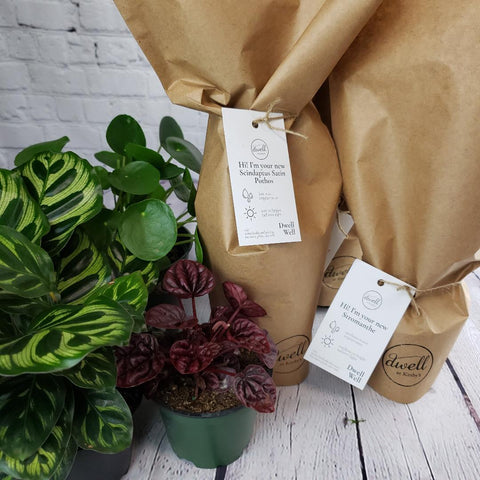 Packaged Plants add Nature to Your Home.