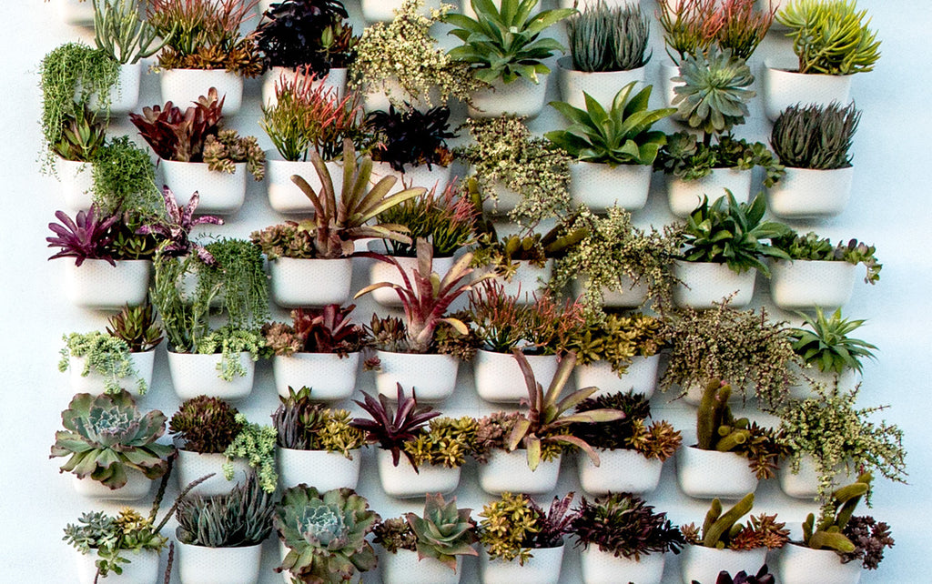 Living Wall on house plant support, house plant diagnosis, house plant lighting, house plant safety, house plant maintenance, house plant room, house plant marketing, house plant construction, house plant texture, house plant people, house plant design, house plant scale, house plant search, house plant identification, house plant benefits,