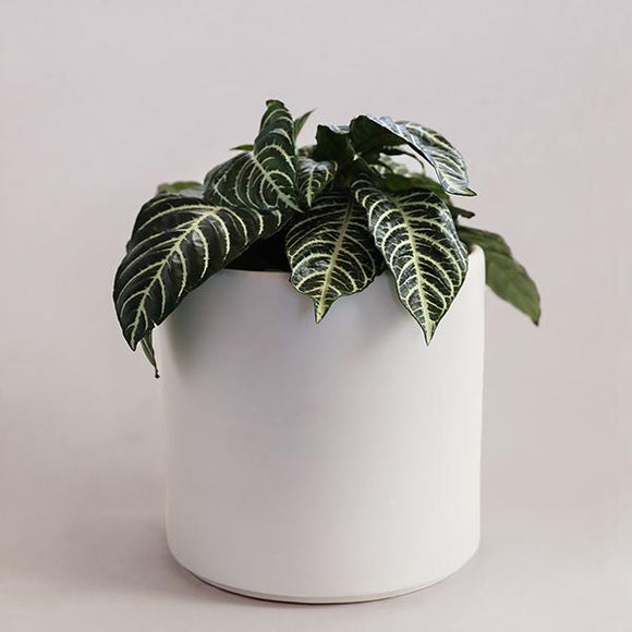 Deep Cylinder Pot - Matte White