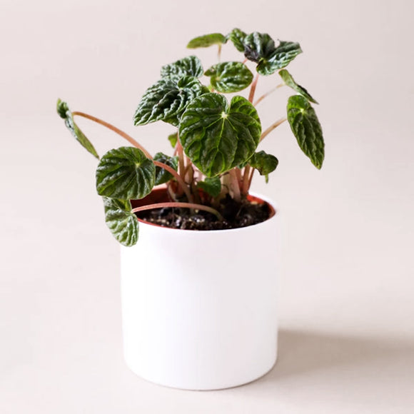 White Cercle Planter - Small - Pigment