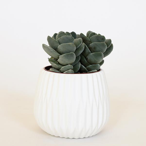 Fluted Ceramic Pot - 5