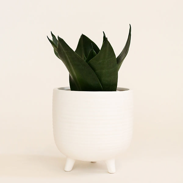Footed Petit Pot - White - Pigment