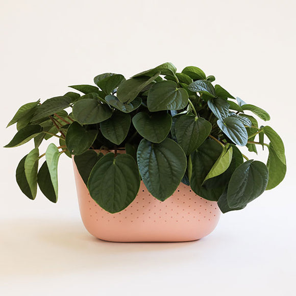 Living Wall Planters - Rose