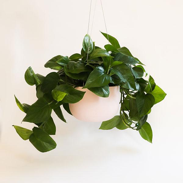 Raw Earth Hanging Planter - Salt Pink
