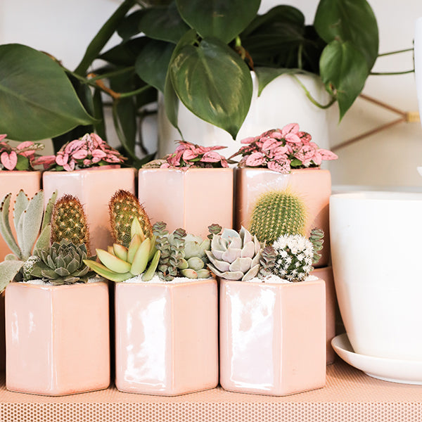 Light Pink Hula Pot