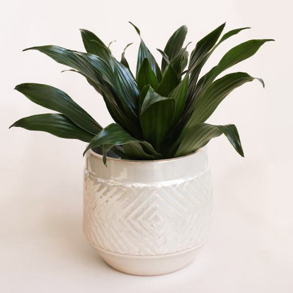 Pearlized Glaze Embossed Stoneware Planter - Pigment