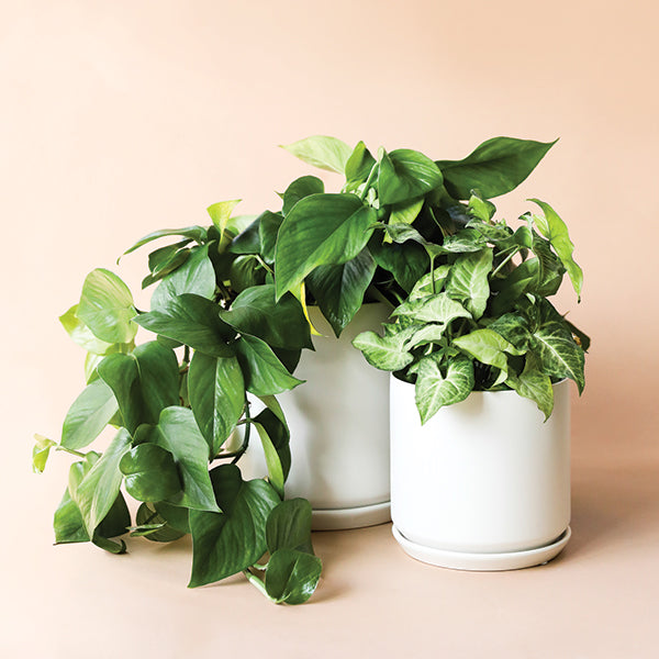 Cylinder Planter with Tray - Cloud