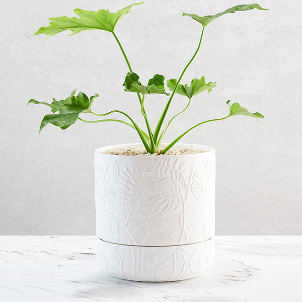 Folia Relief Pot - White