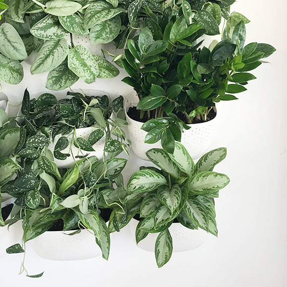Living Wall Planters - White