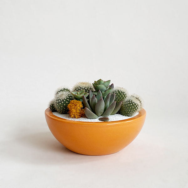 Glazed Low Bowl - Orange