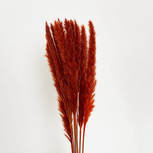 Dried Pampas Grass - Saffron