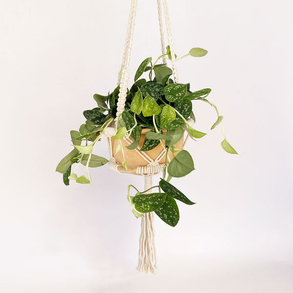 Macrame Plant Hanger with Bamboo
