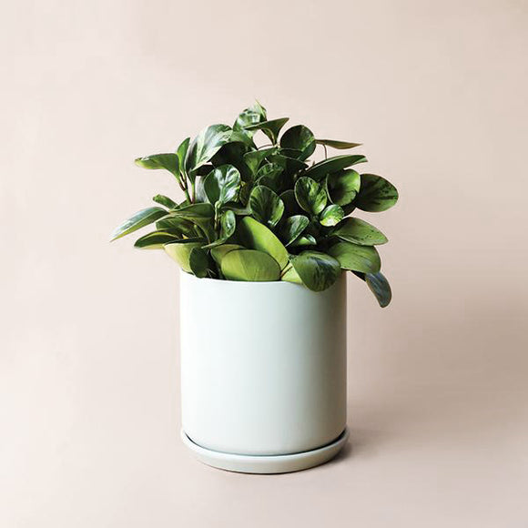 Cylinder Planter with Tray - Mist - Pigment