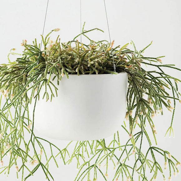Raw Earth Hanging Planter - Chalk White