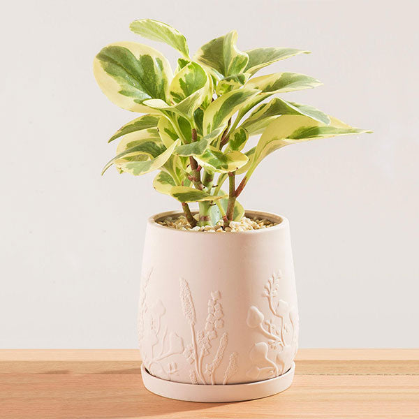 Relief Plant Pot - Blush