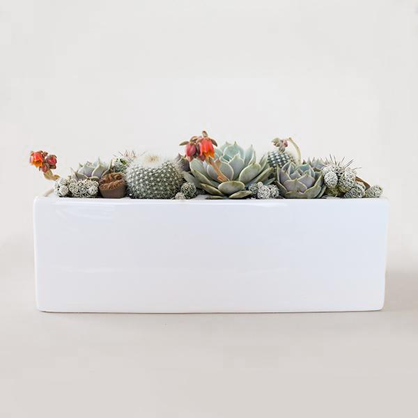 Ceramic Ledge Planter - White - Pigment