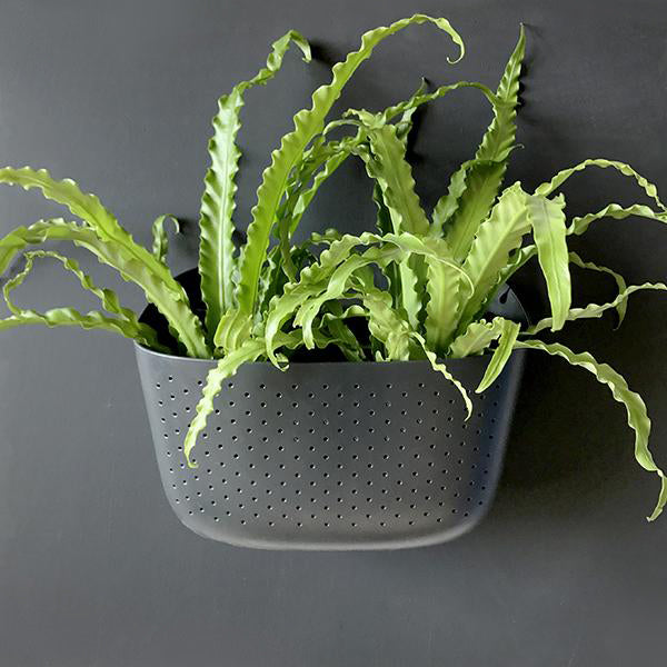 Living Wall Planter - Charcoal - Pigment