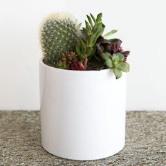 White Cercle Planter - Large, Planted with Cactus with Succulents, on Chilewich Placemats
