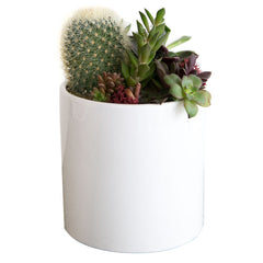 White Cercle Planter - Large, Planted with Cactus with Succulents