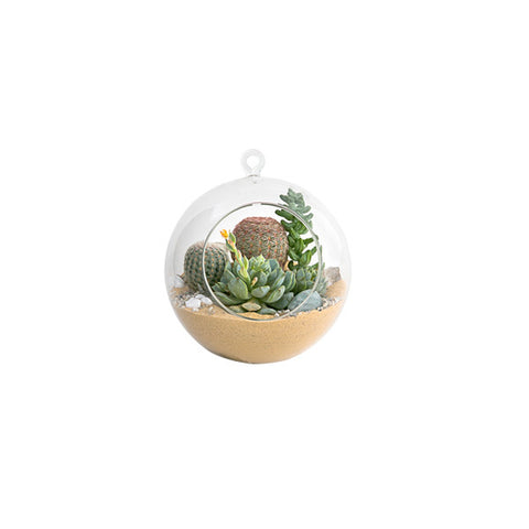Hanging Glass Orb – Mini, Planted with Succulents and Cacti