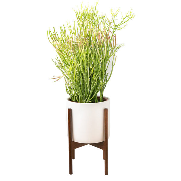 charcoal large study planter small hex ceramic case with stand metalstand shop r casestudy modernica w