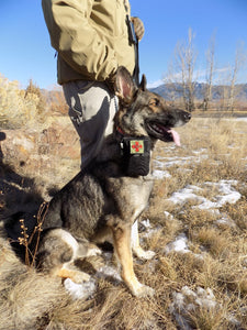 Survival - Zeke Wearing Heeler Dog Medical Kit - Wilderness Survival Systems : Picture