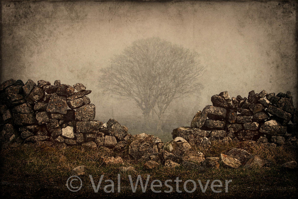 Wall Art - A Black Thorn Tree in the fog behind a stone wall