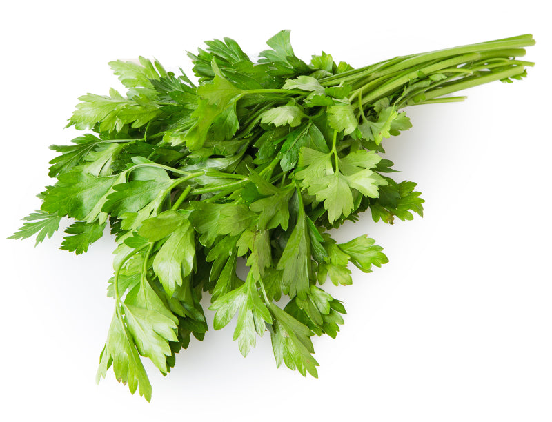 Herb Continental Parsley