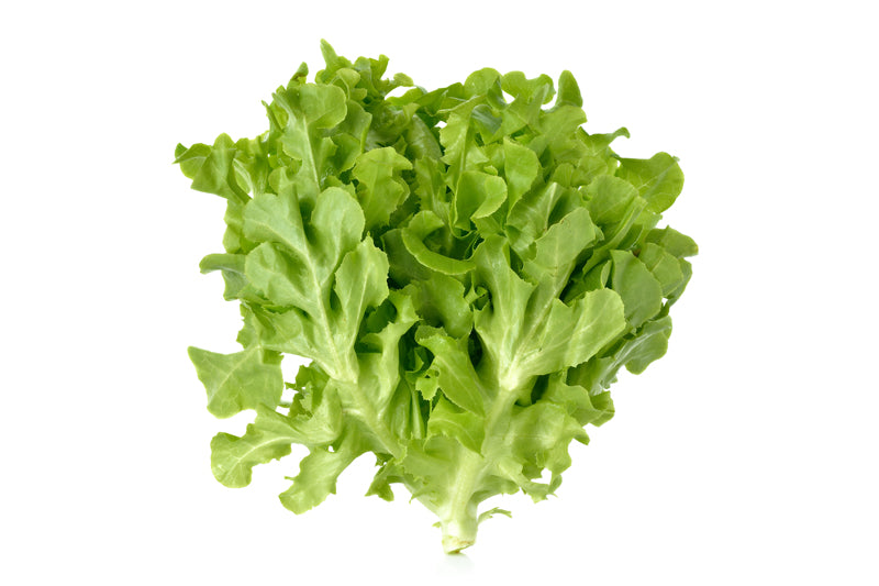 Lettuce Oak Green