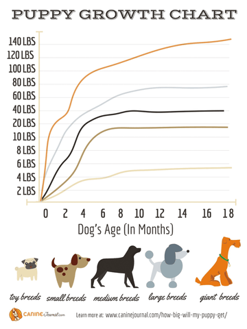 puppt growth chart