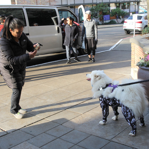 """Urban Doggo"" Dog Pants"