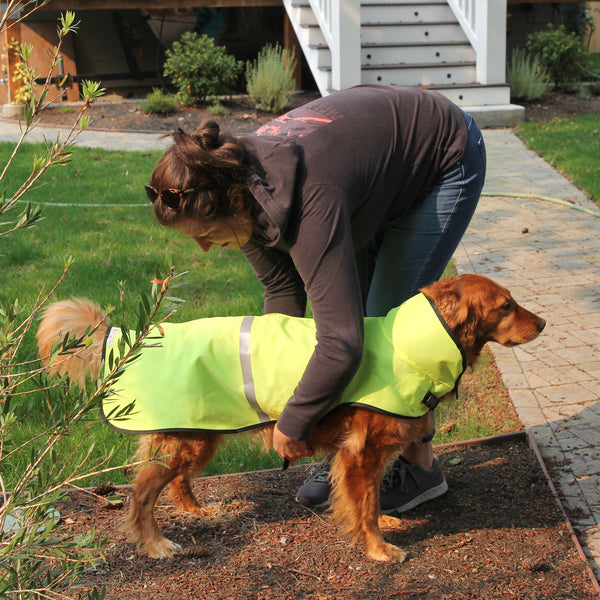 dog rainjacket