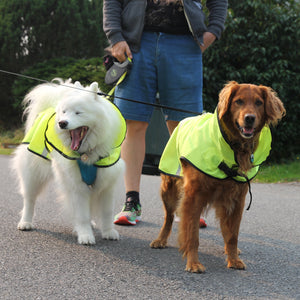 rain jacket for dog