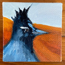 Load image into Gallery viewer, Stellar Jay