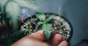 Cannabinoids: What are They? How do they affect Me?