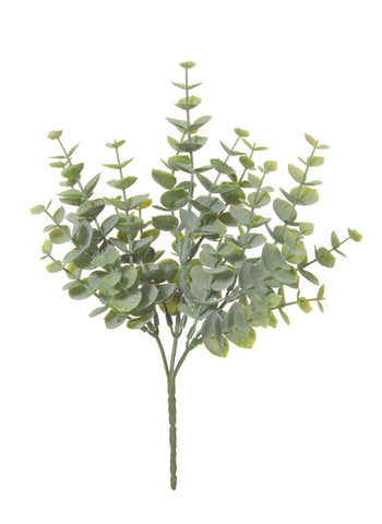 Eucalyptus Bush Small