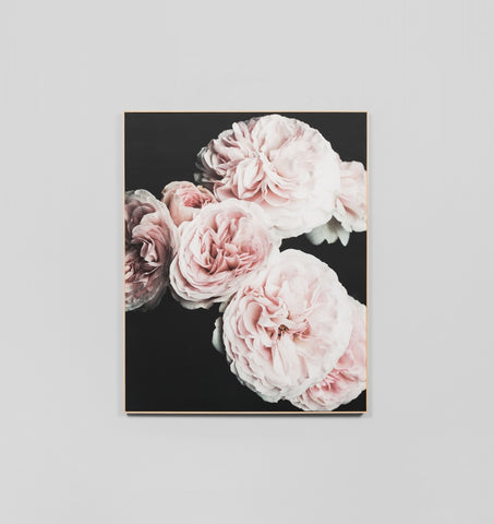 Blush Roses Framed Canvas