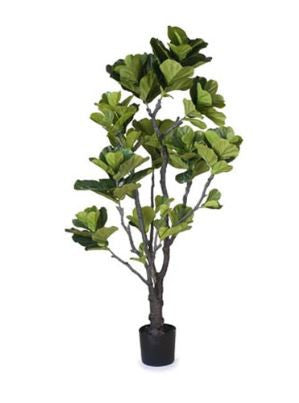 Fiddle Leaf Fig ~ Large