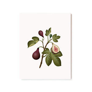 Scented Card || Fig