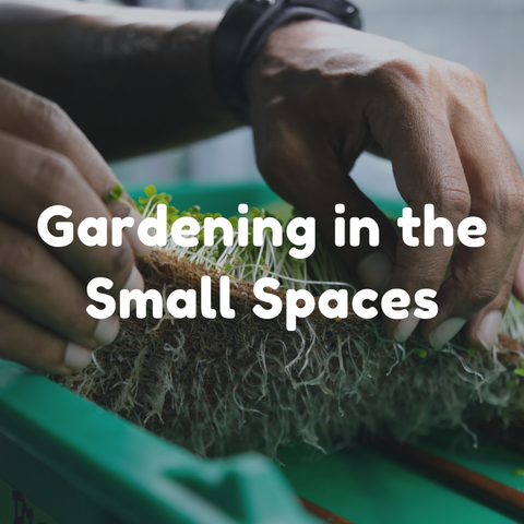 Gardening in the Small Spaces