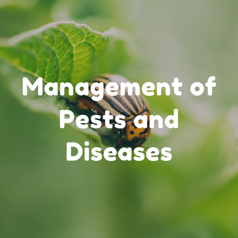 Management of Pests and Diseases