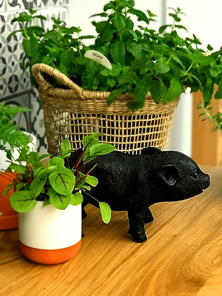 Black Resin Pig Money Box