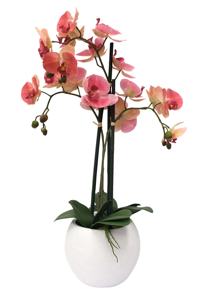 Orchid in Pot Pink by  Florabelle Living - Shop Charlies Interiors